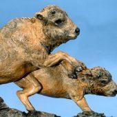Buffalo Calves